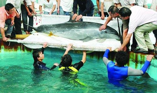 海豚兄弟到达动物园后,园方请来十几名彪形大汉
