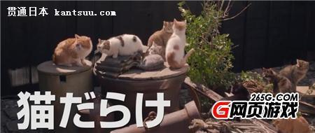 猫咪与爷爷
